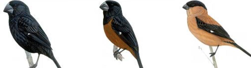 Vogel Vereniging Euromast (VVE)